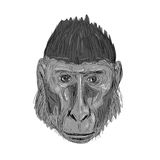 Crested Black Macaque Head Drawing. Illustration of Crested Black Macaque Head facing front done in hand sketch Drawing style Royalty Free Stock Images