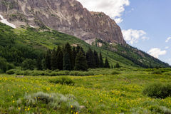 Crested butte colorado mountain landscape and wildflowers Stock Photography