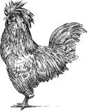 Crested cock Royalty Free Stock Images