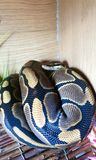 Reptiles stock photography