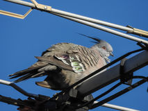 Bird on the antenna Stock Image