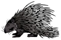 Crested Porcupine (Hystrix Cristata) Stock Images
