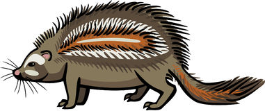 Crested Rat. Illustration of venomous rodent the crested rat Stock Images