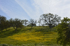 Creston Hillside in bloom Stock Photo