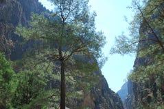 Creta, Samaria Gorge, mismo hermosa vista de las montañas y los pequeños árboles, las piedras, la arena y el sol caliente imágenes de archivo libres de regalías
