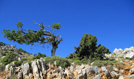 Cretan landscape Stock Photos