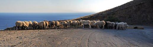 Cretan panorama with sheeps Stock Photos