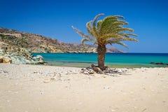 Cretandatumpalmträd på den Vai stranden Arkivfoto