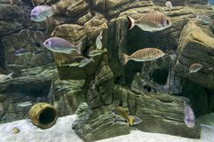 ` cretaquarium ` Zdjęcie Stock