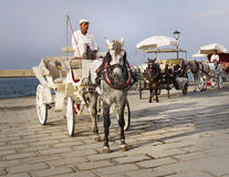 Horse Drawn Carriage Rides  Stock Image