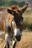 Crete / Donkey Stock Photo