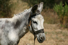 Crete / Donkey stock photos