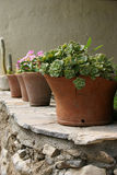 Crete / Flower Pots On A Wall Stock Image