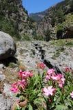 Crete flowers Stock Photography