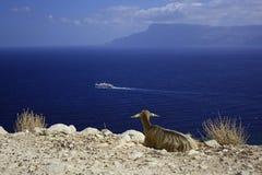 Crete. Greece Royalty Free Stock Photo