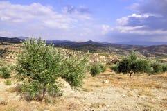 Crete grekisk ö Arkivbild