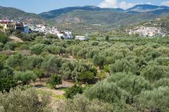 Crete island inland countryside landscape mountain view plantation olives fields green stock photos