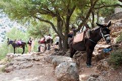 CRETE-JULY 21: Jama Zeus i osioł na Lipu 21,2014 na Crete wyspie w Grecja Obrazy Royalty Free