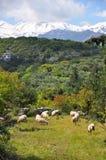 Crete landscape Stock Images