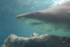 Crete. Oceanarium. Shark. stock photo