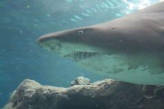 crete Oceanarium Squalo Fotografia Stock