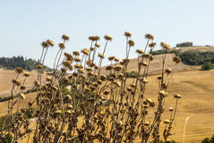 Crete senesi, characteristic landscape in Val d'Orcia Royalty Free Stock Image
