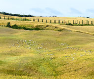 Crete Senesi (Tuscany) Stock Photo