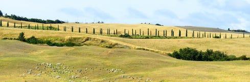 Crete Senesi (Tuscany) Royalty Free Stock Image