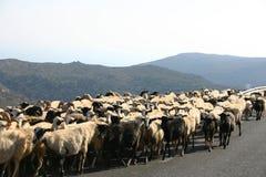 Crete / Sheep blockade Royalty Free Stock Photo