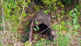 Creusé tronçon d'arbre tombé mort se trouvant sur le plancher de forêt entouré par la végétation verte image stock