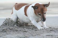 Creusement sur la plage Photo libre de droits