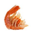 Crevette bouillie Photographie stock libre de droits