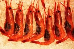Crevette crue fraîche Photographie stock libre de droits