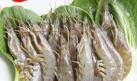 Crevette crue fraîche 1 Photos libres de droits