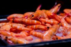 Crevette cuite à la vapeur sur la glace dans la ligne de buffet d'hôtel photo stock