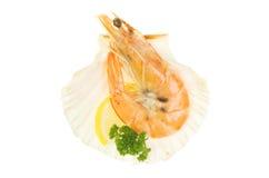 Crevette dans l'interpréteur de commandes interactif Photo stock