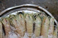 Crevette de mante Images libres de droits