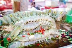 Crevette de mante Photographie stock libre de droits