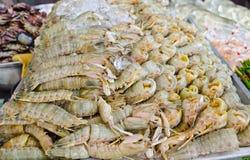 Crevette de Mantis avec de la glace Images stock