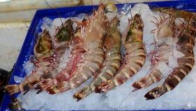 Crevette fraîche énorme vendue sur la glace Image libre de droits