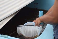 Crevette larvaire dans la cuvette en plastique Animaux d'aquiculture images libres de droits
