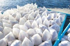 Crevette larvaire dans un sachet en plastique flottement dans un étang de crevette photos stock