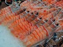 Crevette rose cuite de scampi, crevette rose mignonne Images libres de droits