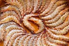 Crevette rose de roi Photographie stock libre de droits