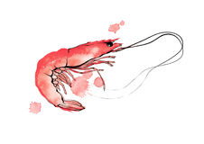 Crevette rouge d'aquarelle simple sur l'illustration blanche de fond Photos stock