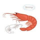 Crevette rouge royale réglée avec la légende Illustration d'isolement sur le fond blanc Symbole de fruits de mer Images libres de droits