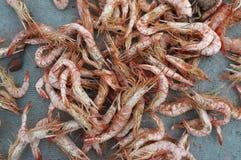 Crevette sèche, fruits de mer conservés Photos libres de droits