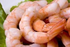 Crevettes Image libre de droits