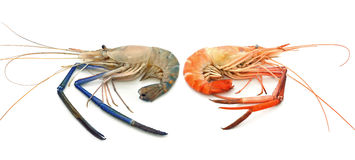 Crevettes Photo stock