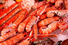 Crevettes Images stock